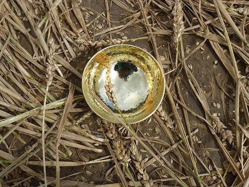 bowl in cornfield